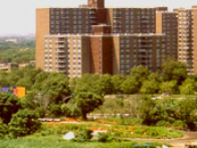 Spring Creek Towers, Brooklyn, NY